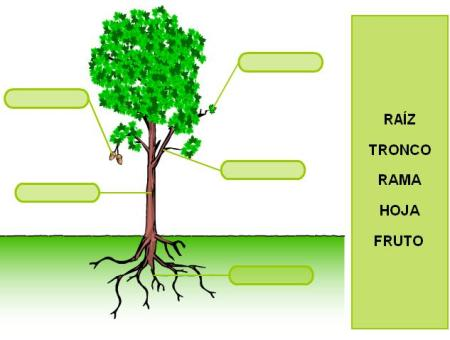Partes de la planta | Webquest: Concepto, Origen, Estructura ...